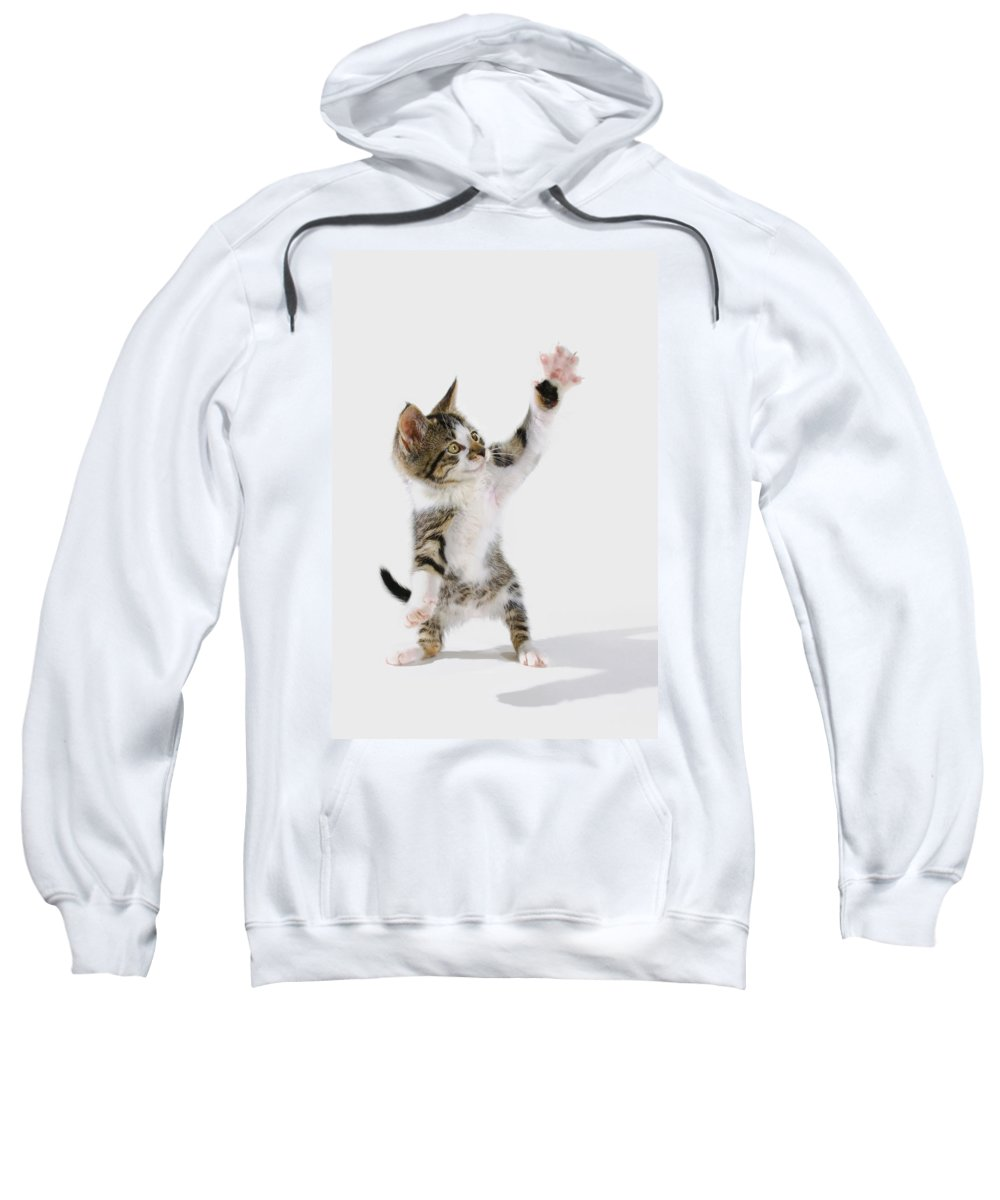 Active Sweatshirt featuring the photograph Kitten by Thomas Kitchin & Victoria Hurst