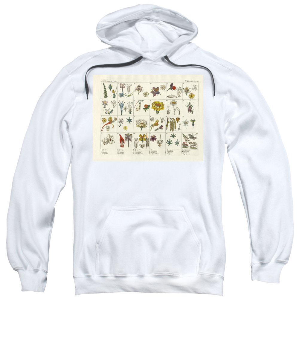 Bertuch Sweatshirt featuring the drawing Linne's Plant System by Splendid Art Prints