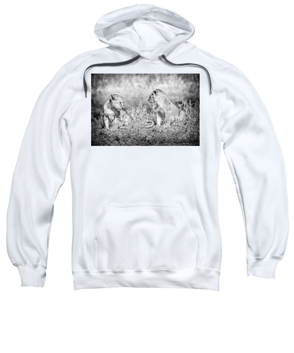 3scape Sweatshirt featuring the photograph Little Lion Cub Brothers by Adam Romanowicz