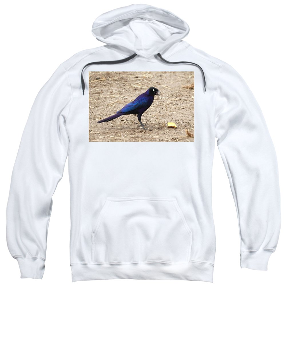 Long Tailed Glossy Starling Sweatshirt featuring the photograph Long Tailed Glossy Starling by Carole-Anne Fooks