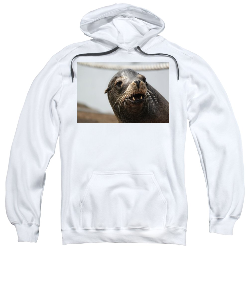 Seals. Seal Sweatshirt featuring the photograph Looking For The Ladies by Melanie Lankford Photography