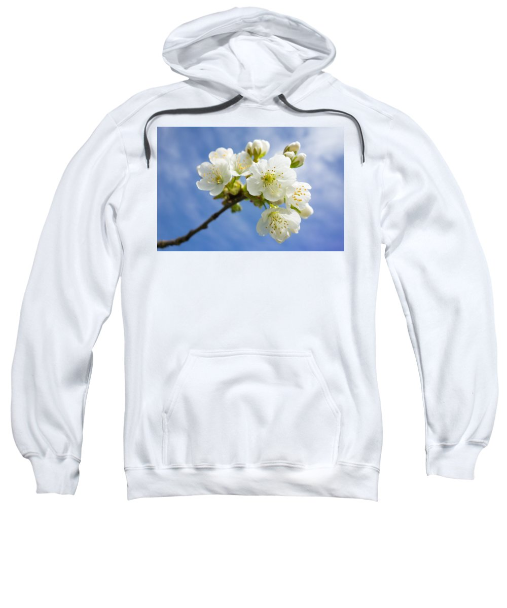 Apple Blossom Sweatshirt featuring the photograph Lovely White Apple Blossoms On Branch by Matthias Hauser