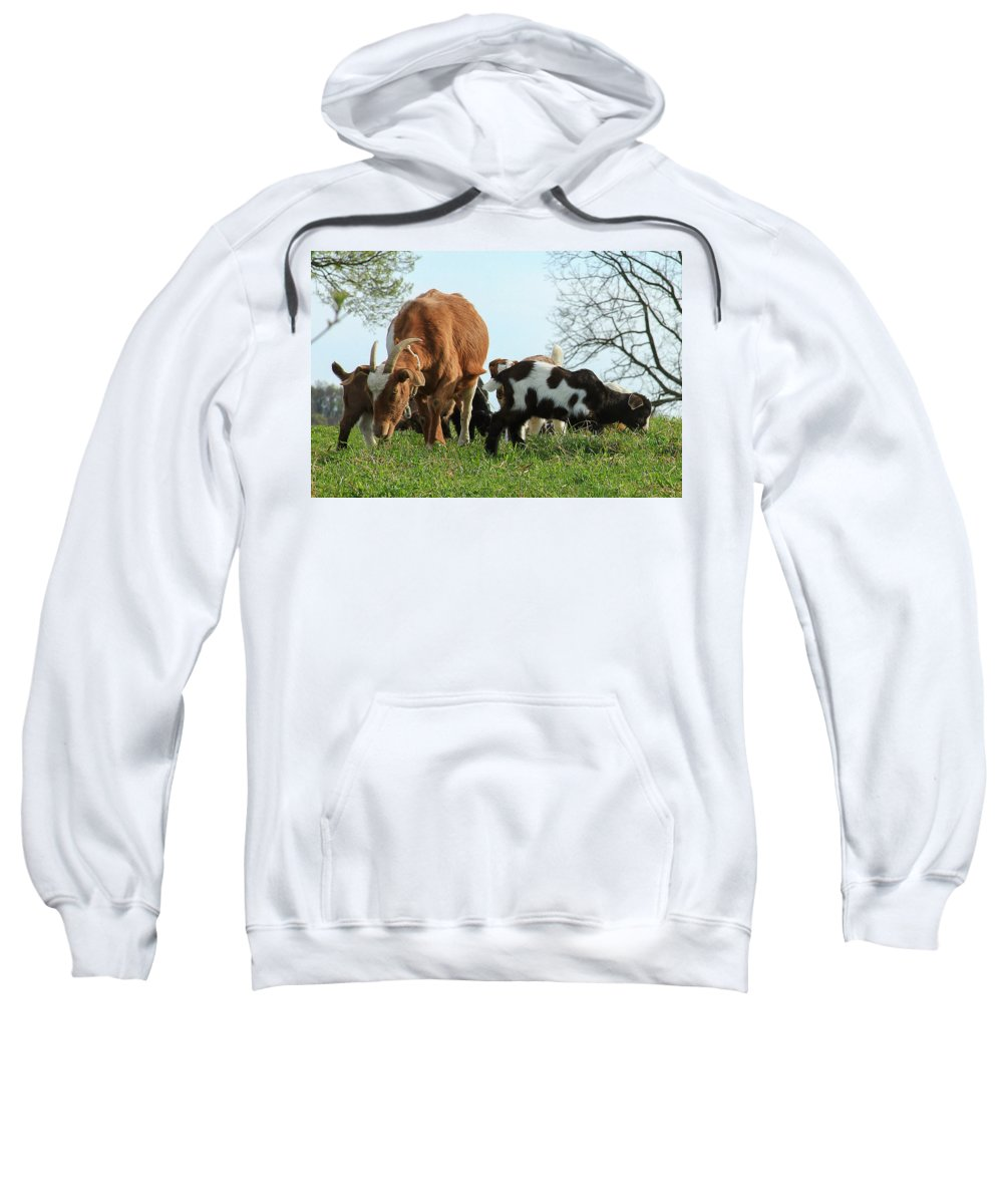 Animal Sweatshirt featuring the photograph Lunch Time by Sharon Horn