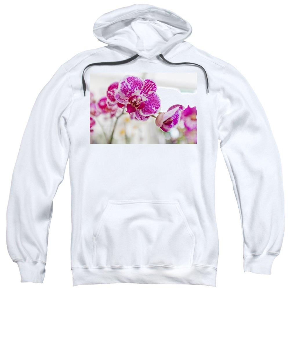 Rhs Sweatshirt featuring the photograph Magenta Ears Orchid by Maj Seda