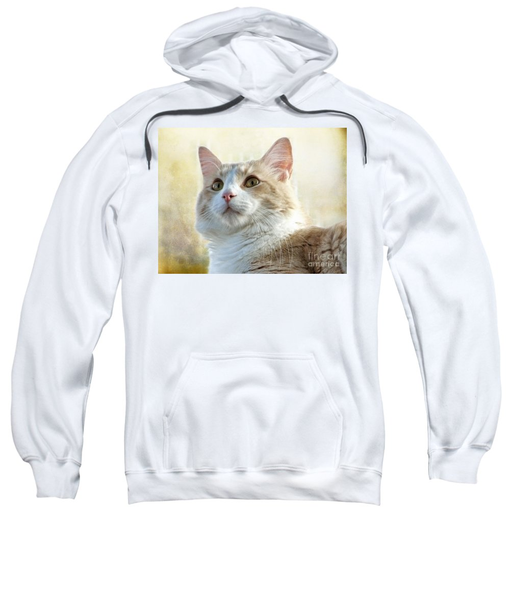 Cats Sweatshirt featuring the photograph My Squishy by Ellen Cotton