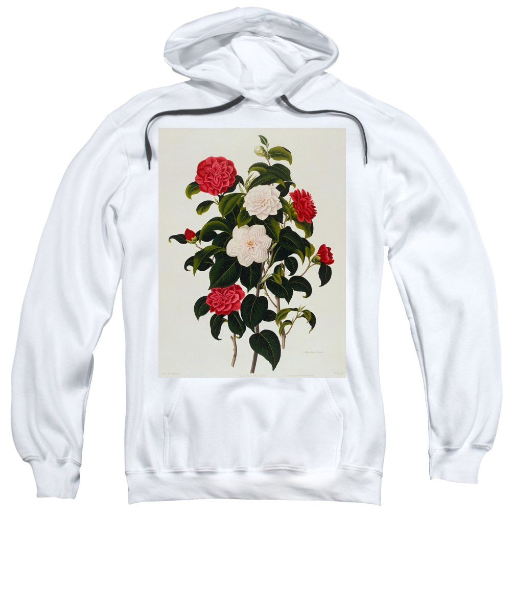 Flower Sweatshirt featuring the painting Myrtle Leaved Camellia by Clara Maria Pope