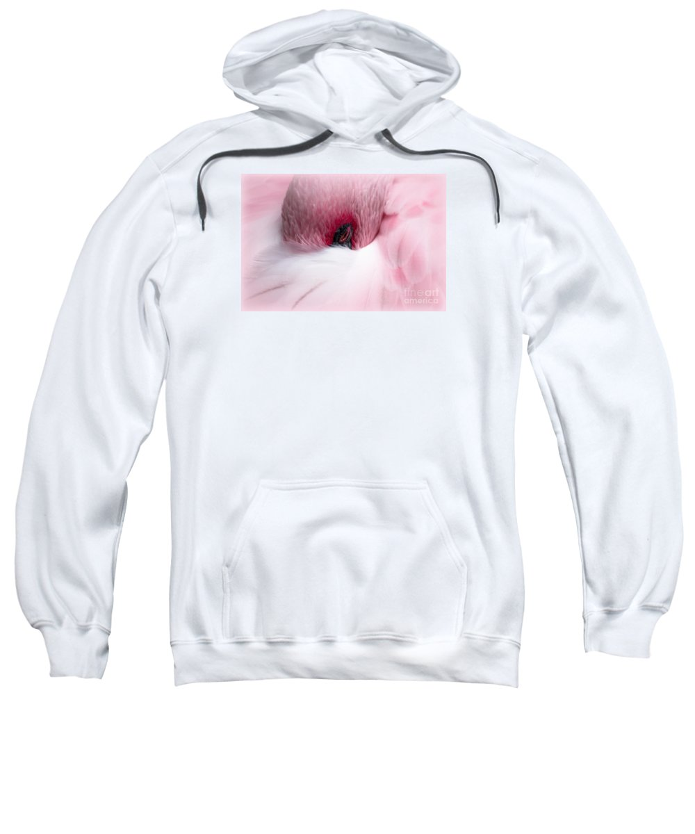 Nap Sweatshirt featuring the photograph Nap Time by Lisa L Silva