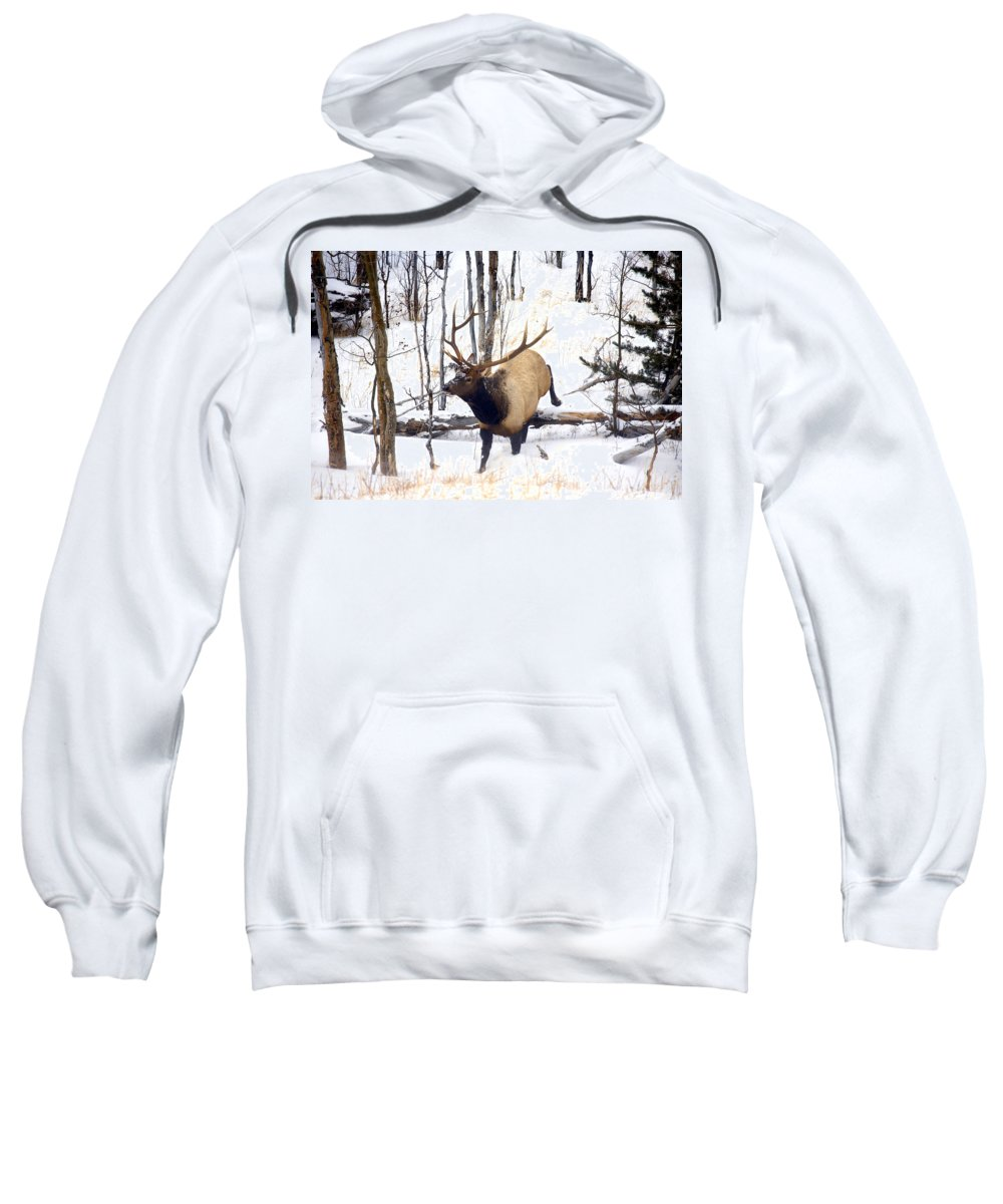 Elk Sweatshirt featuring the photograph On The Move by Mike Dawson