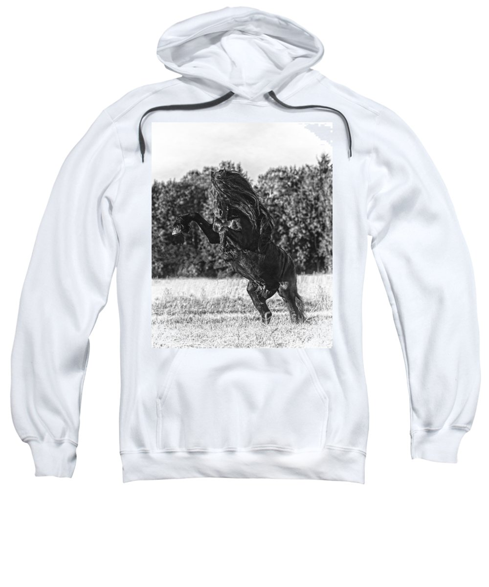 One Trick Pony Sweatshirt featuring the photograph One Trick Pony by Wes and Dotty Weber