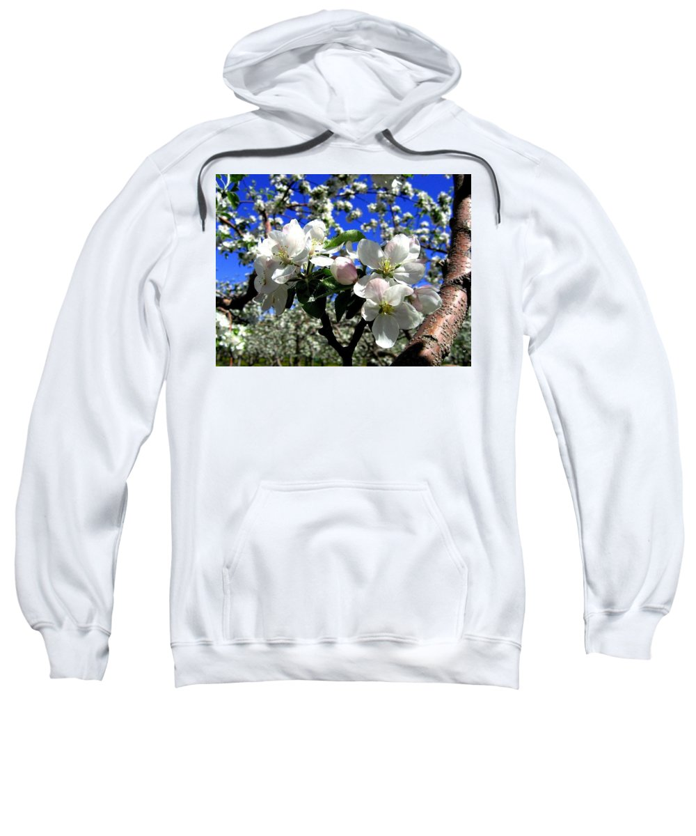 Apple Blossoms Sweatshirt featuring the photograph Orchard Ovation by Will Borden