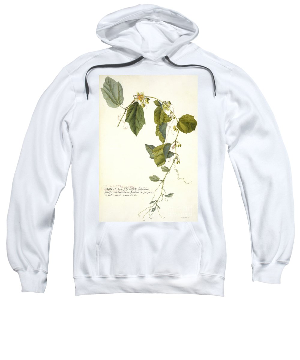 Ehret Sweatshirt featuring the painting Passion Flower by Georg Dionysius Ehret