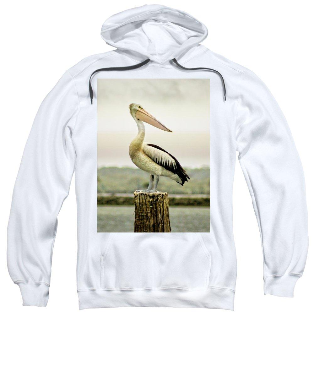 Animlas Sweatshirt featuring the photograph Pelican Poise by Holly Kempe