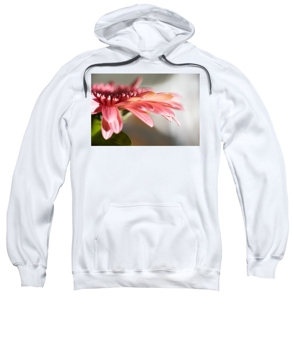 Pink Sweatshirt featuring the photograph Pink Gerber Daisy by Marilyn Hunt