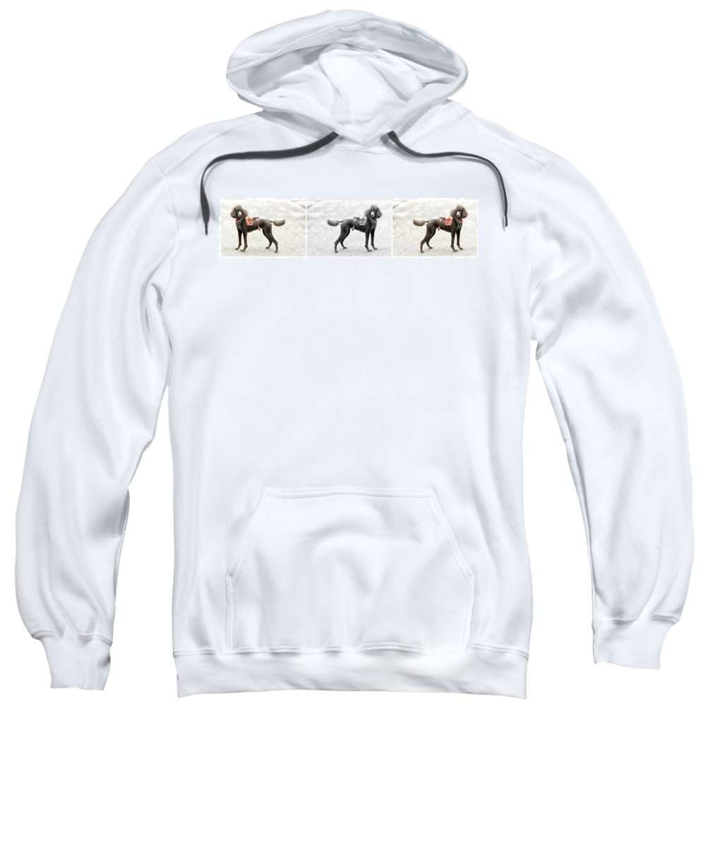Poodle Sweatshirt featuring the photograph Poodle Jockey Triptych by Alice Gipson