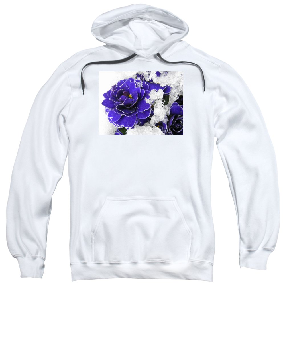 Primula Sweatshirt featuring the photograph Primulas In The Snow by Wendy Le Ber