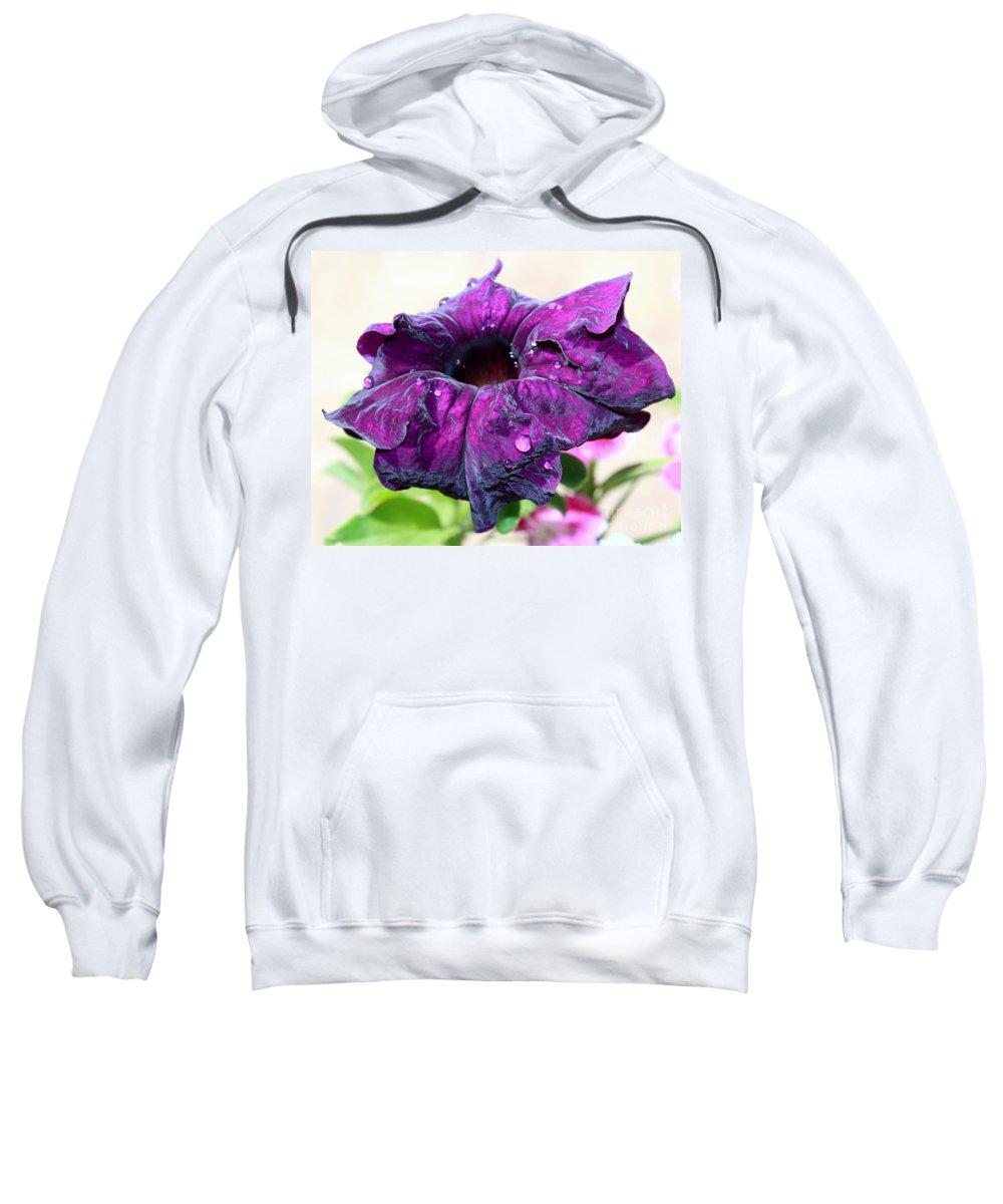 Purple Petunia Sweatshirt featuring the photograph Purple Velvet by Krissy Katsimbras