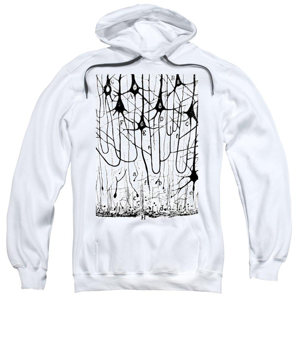 Biological Sweatshirts
