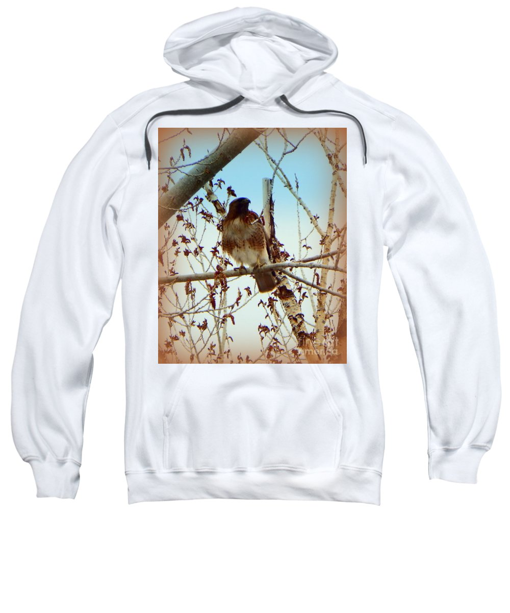 Acrylic Prints Sweatshirt featuring the photograph Raptor Perched by Bobbee Rickard