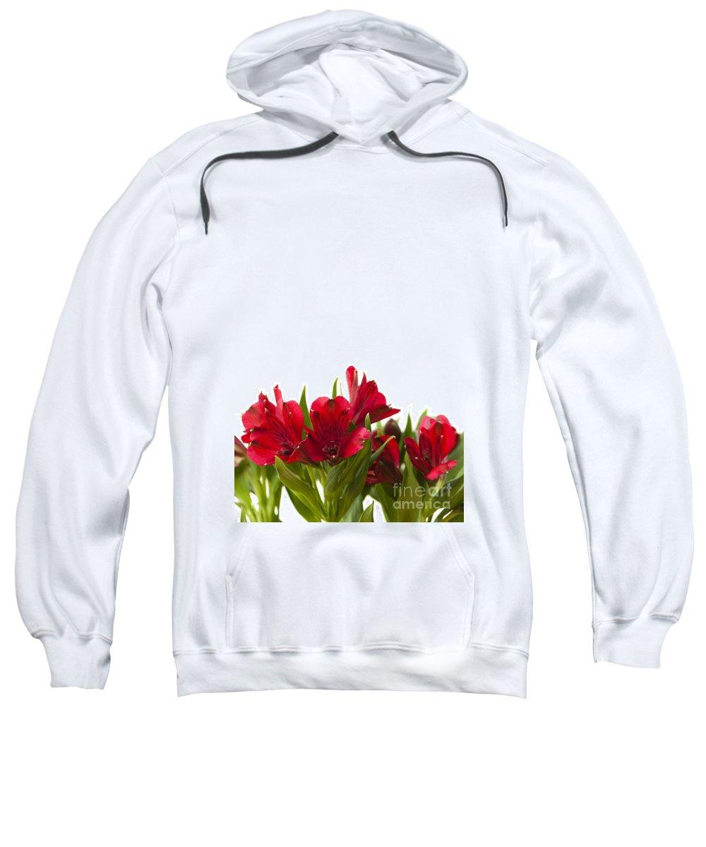 Alstroemeria Sweatshirt featuring the photograph Red Alstroemeria by Anne Gilbert