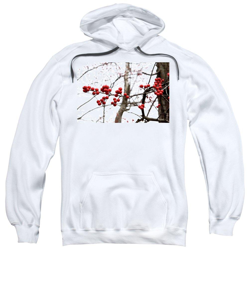 New York Sweatshirt featuring the photograph Red Berry Sprig by Lorraine Devon Wilke