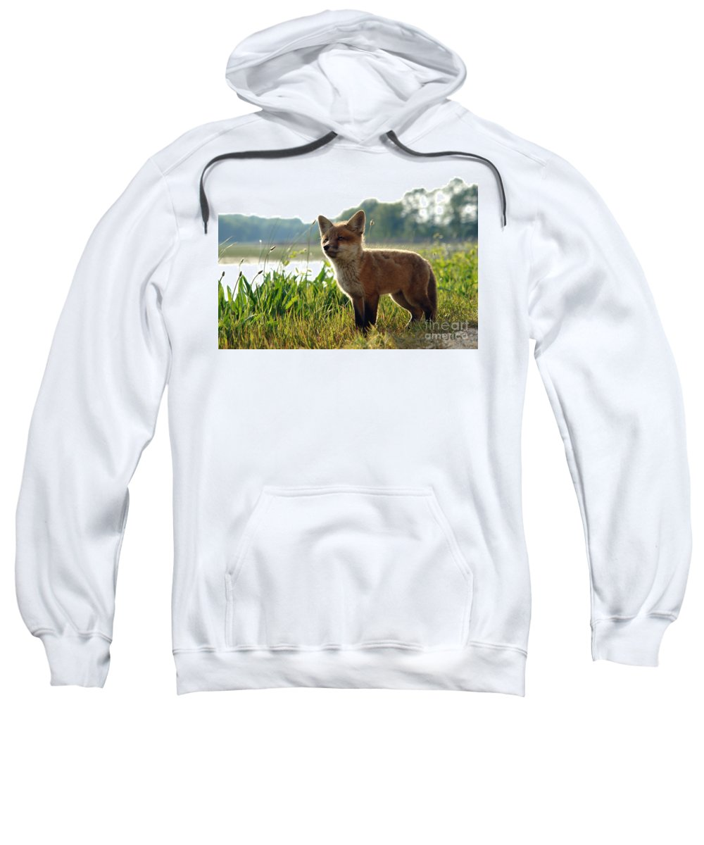Fox Sweatshirt featuring the photograph Red Fox Kit by Olivier Le Queinec