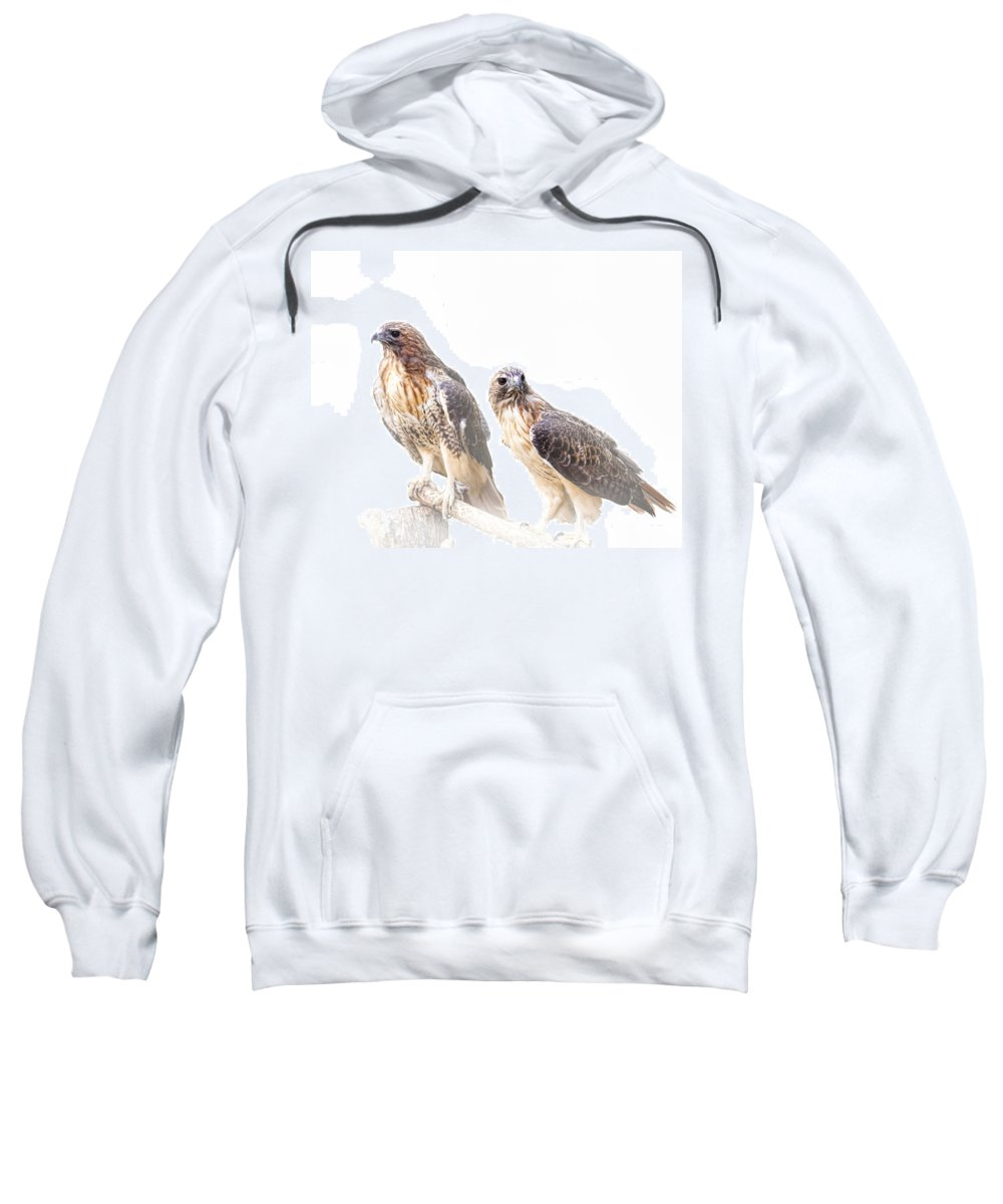 Art Sweatshirt featuring the photograph Red Tail Hawk Pair On White Background by Randall Nyhof