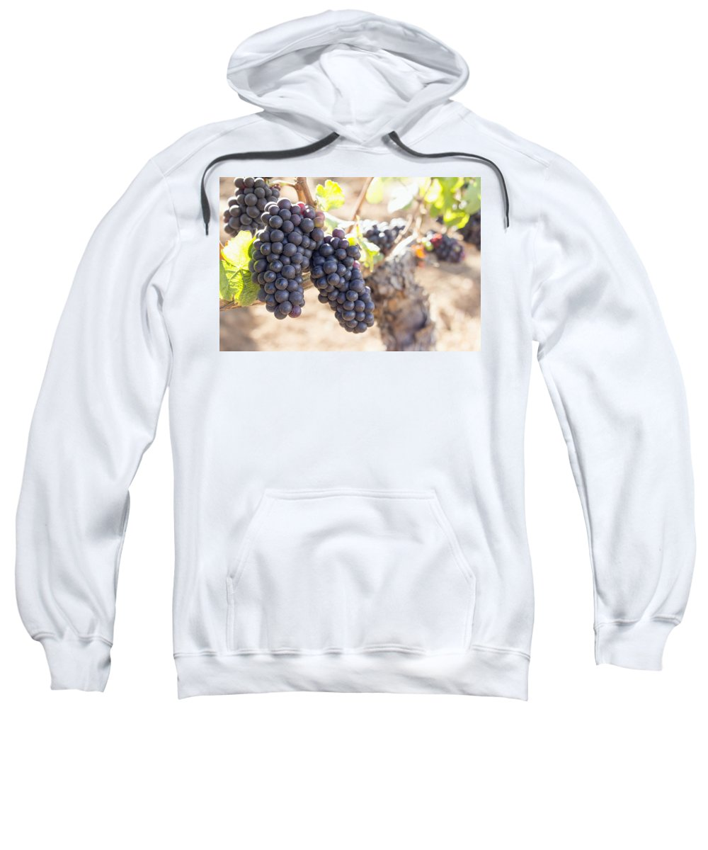 Red Sweatshirt featuring the photograph Red Wine Grapes Growing On Old Grapevine by Jit Lim