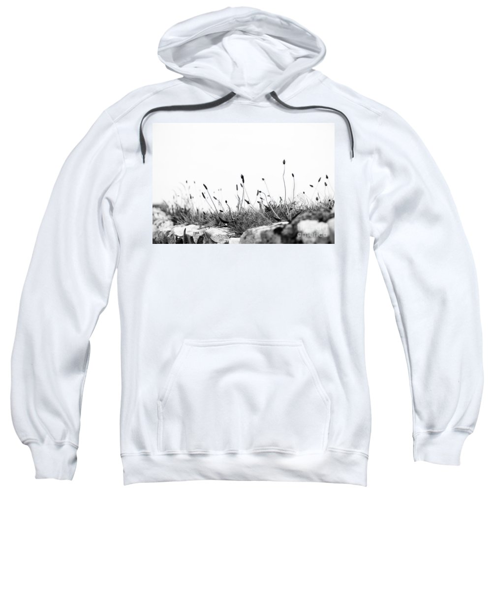 2012 Sweatshirt featuring the photograph Ribwort Plantain by Anne Gilbert