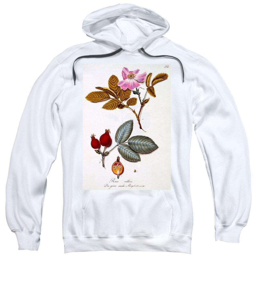 Otany Sweatshirt featuring the painting Rosa Villosa by German School