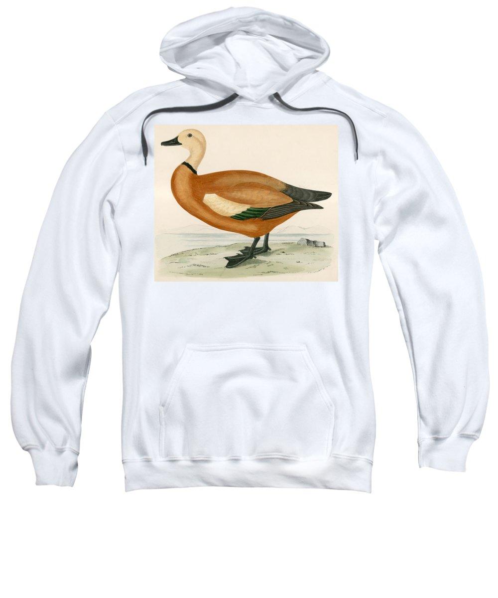 Birds Sweatshirt featuring the painting Ruddy Sheldrake by Beverley R Morris