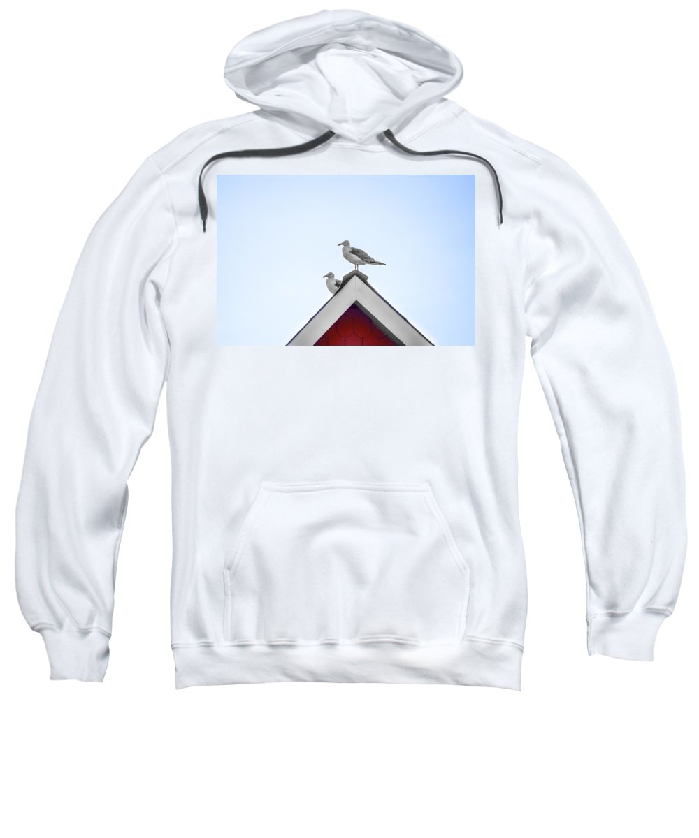 Seagulls Sweatshirt featuring the photograph Seagulls Perched On The Rooftop by Bill Cannon