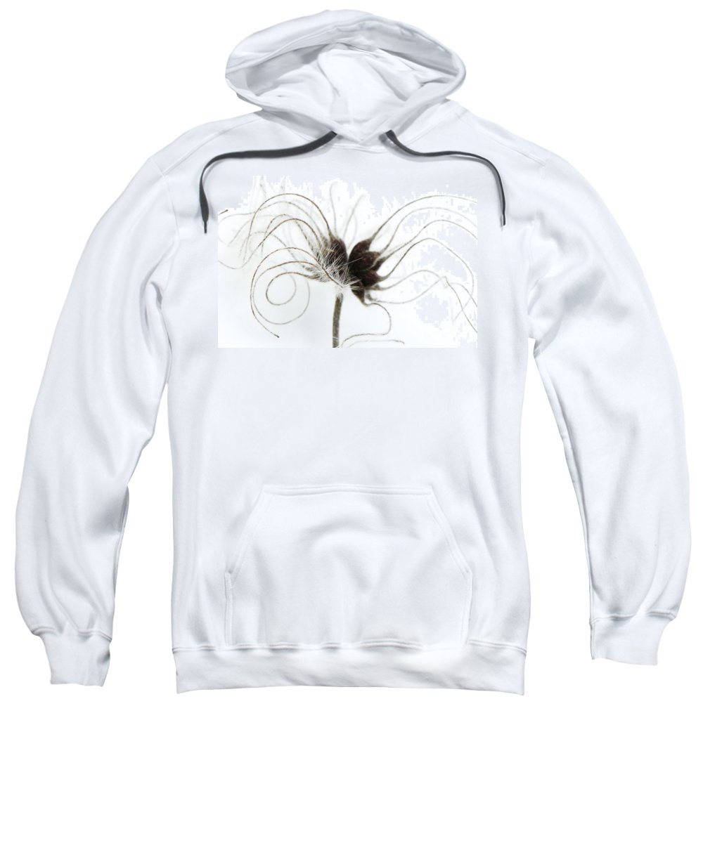Botanical Sweatshirt featuring the photograph Seeds by Anne Gilbert