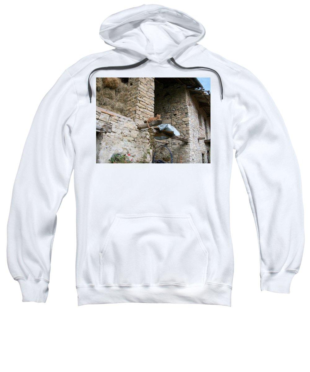 Cat Sweatshirt featuring the photograph Sentry Cat by Zak