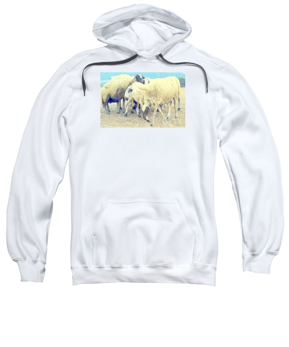 Sheep Sweatshirt featuring the photograph It's So Sheep To Be In The Middle Of A Crowd by Hilde Widerberg