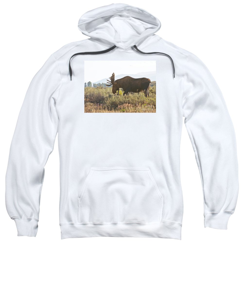 Moose Sweatshirt featuring the photograph Shiras Bull Moose by Timothy Flanigan and Debbie Flanigan Nature Exposure