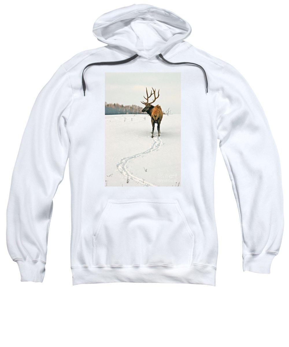 Elk Sweatshirt featuring the photograph Shortest Distance Elk by Timothy Flanigan