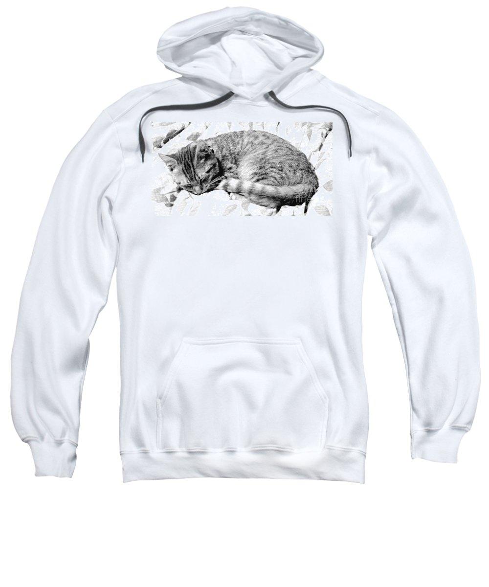 Sleeping Kitten Sweatshirt featuring the photograph Sleepy Kitty by Lilliana Mendez