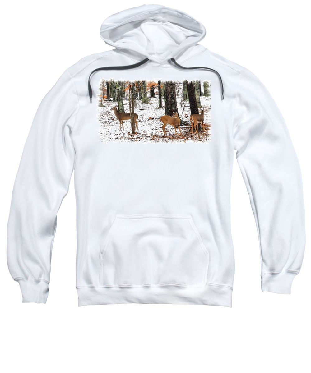 Whitetail Doe Sweatshirt featuring the photograph Snow Doe's 1 by Todd Hostetter