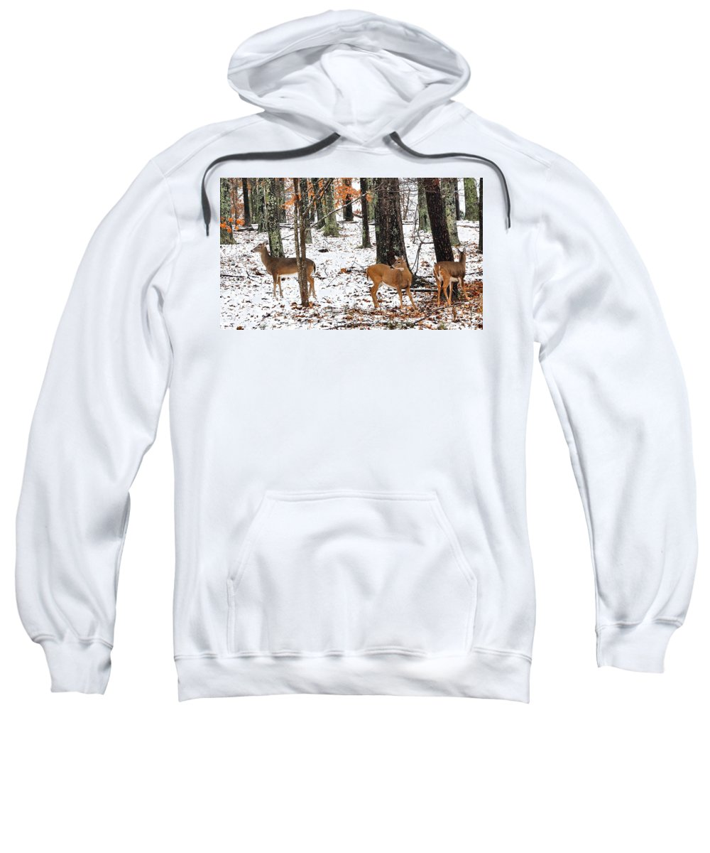 Whitetail Doe Sweatshirt featuring the photograph Snow Doe's by Todd Hostetter