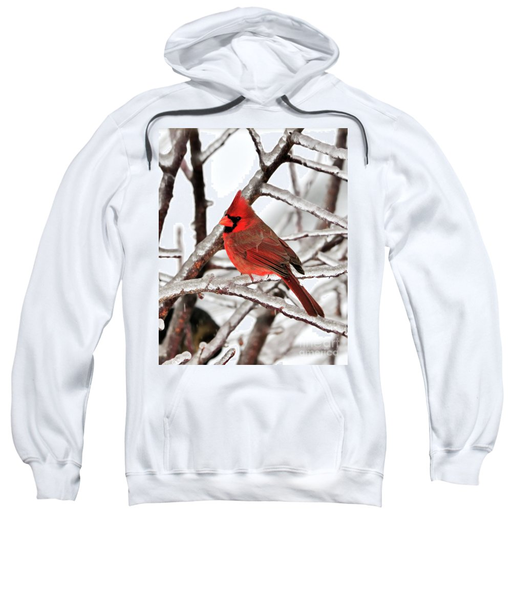 Northern Cardinal Sweatshirt featuring the photograph Splash Of Red by Betty LaRue