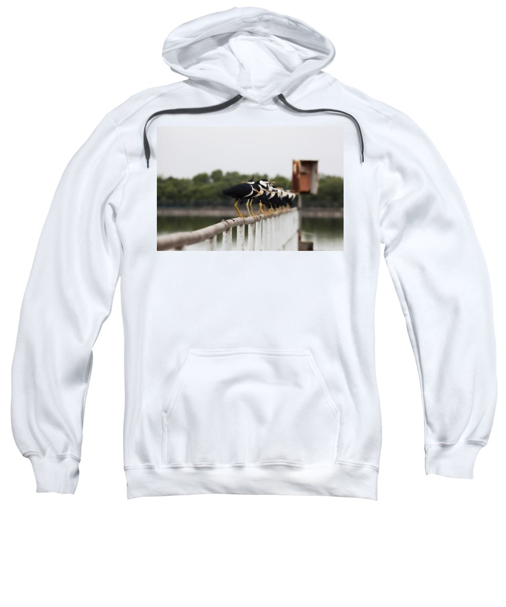 Pied Herons Sweatshirt featuring the photograph Spot The Odd One Out by Douglas Barnard