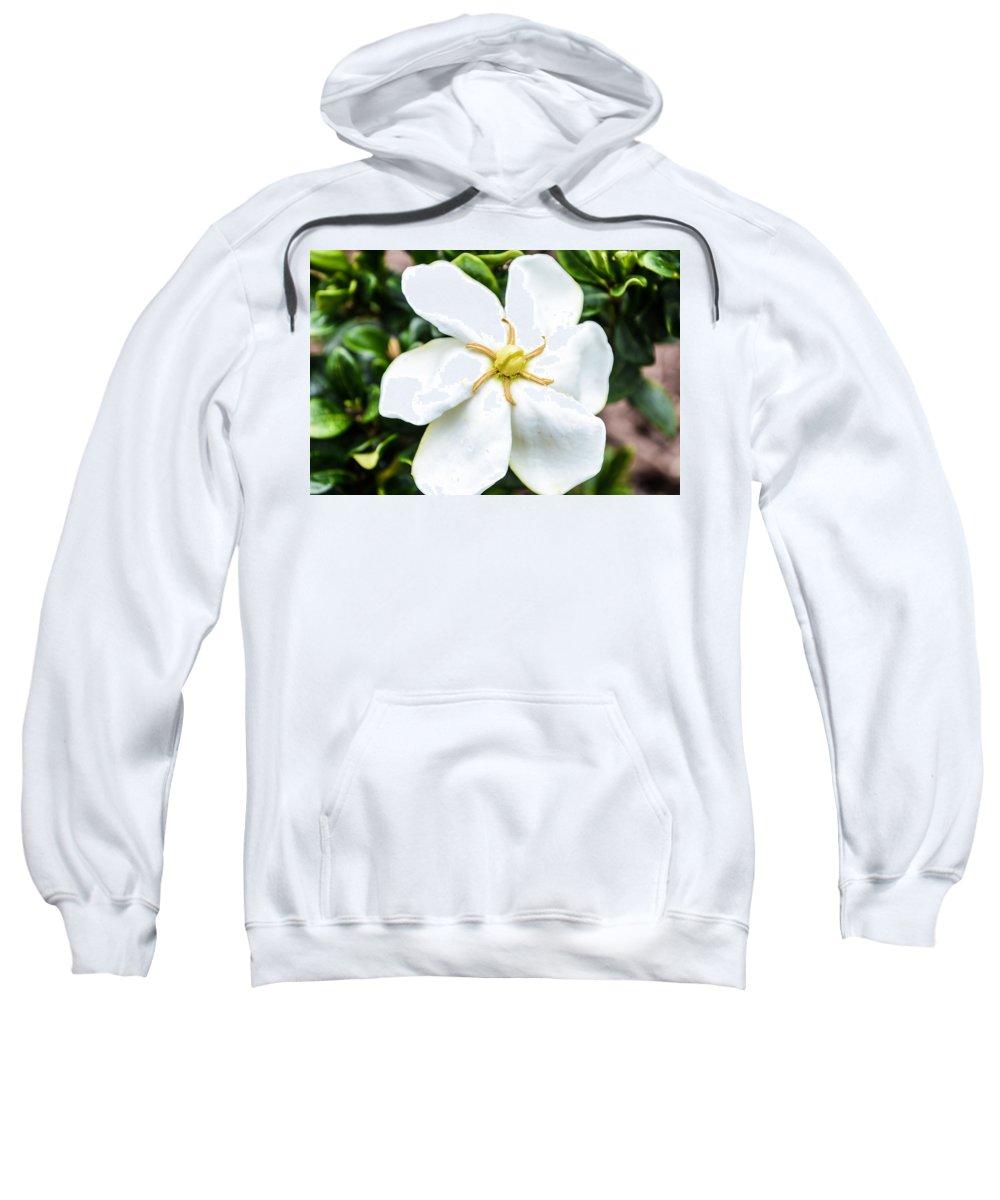 Flowers Sweatshirt featuring the photograph Starfish Gardenia by Mary Hahn Ward