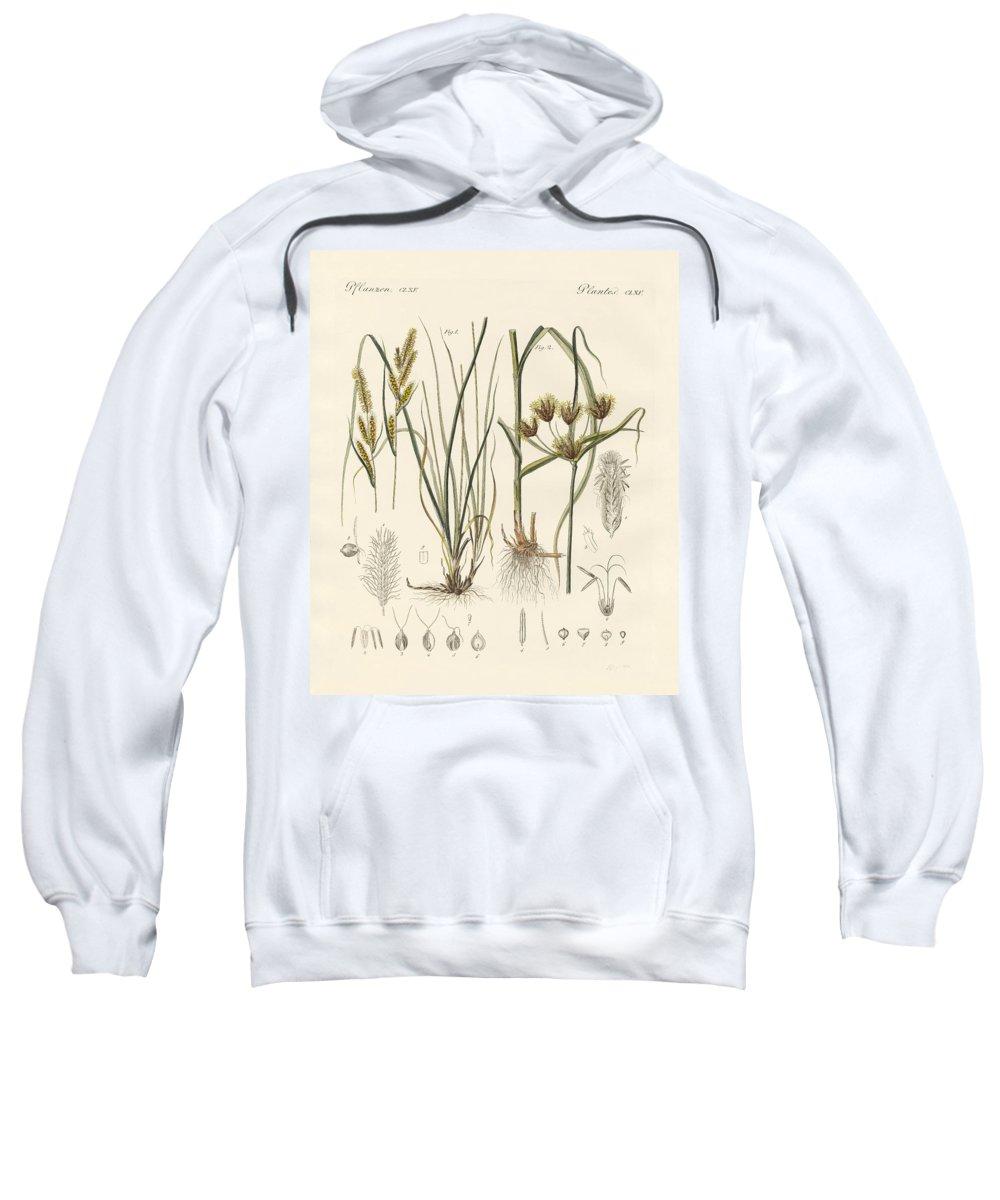 Bertuch Sweatshirt featuring the drawing Strange Grasses by Splendid Art Prints