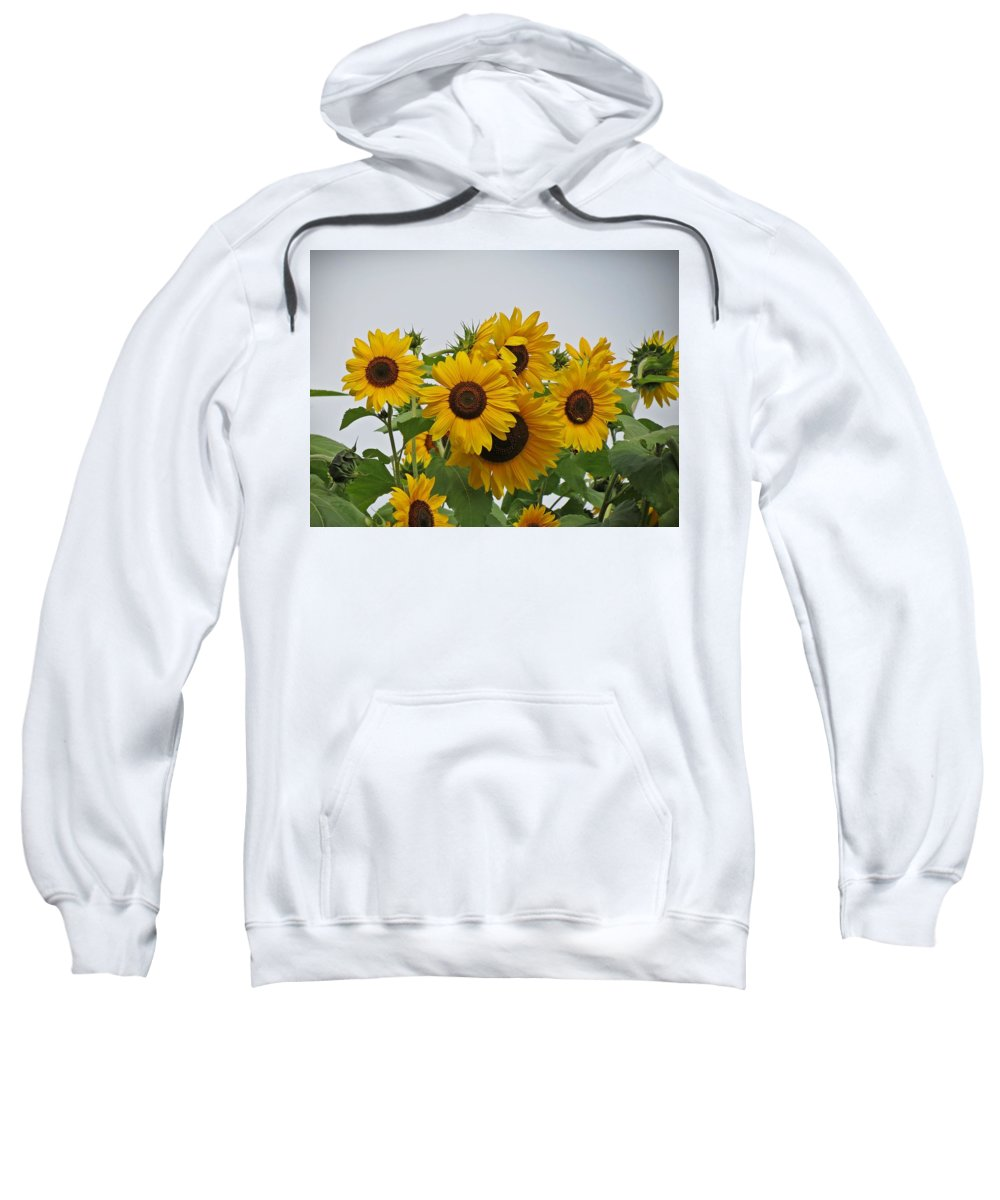 Sunflowers Sweatshirt featuring the photograph Sunflower Group by MTBobbins Photography