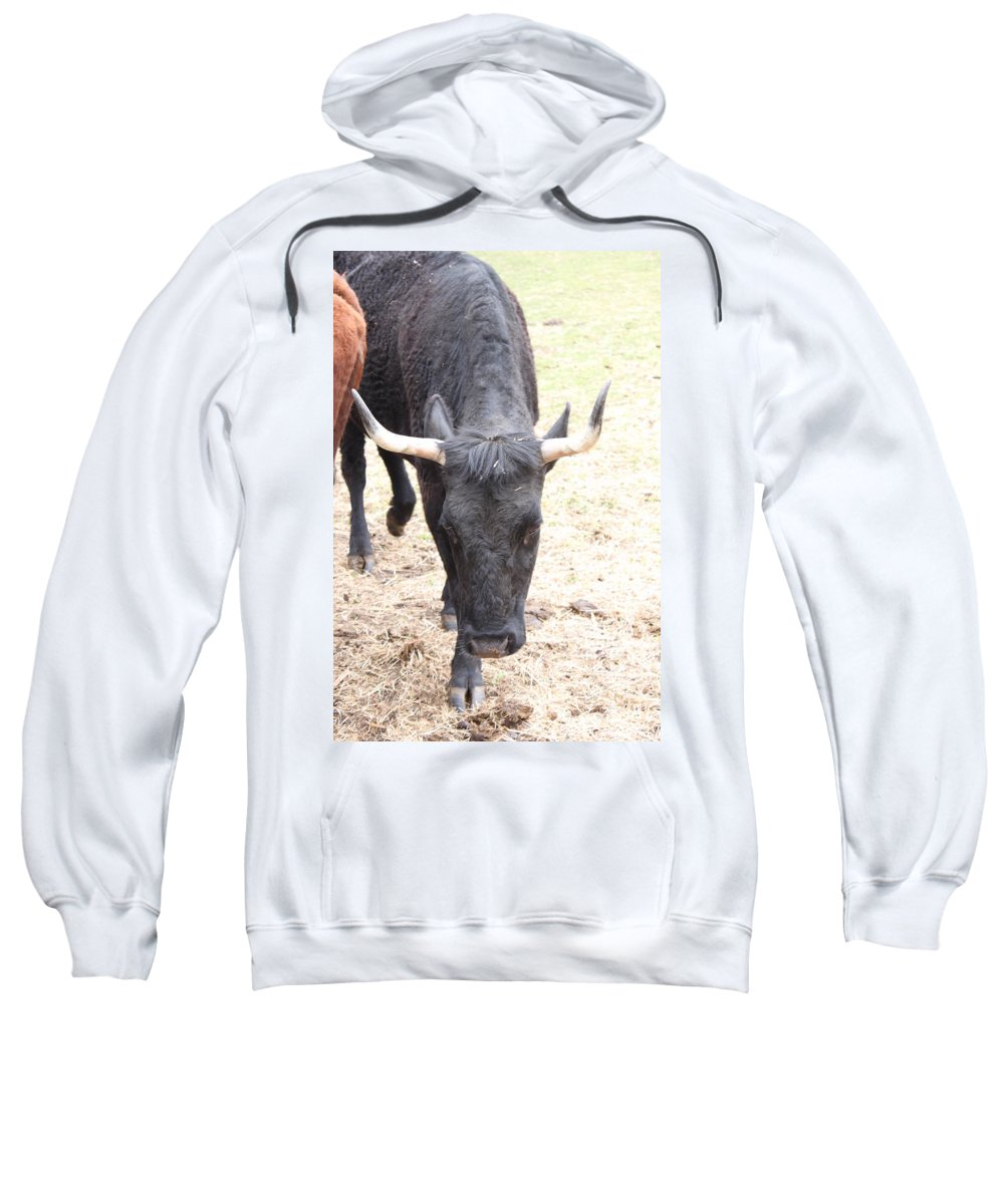 Cow Sweatshirt featuring the photograph That Ain't No Bull by Jennifer E Doll