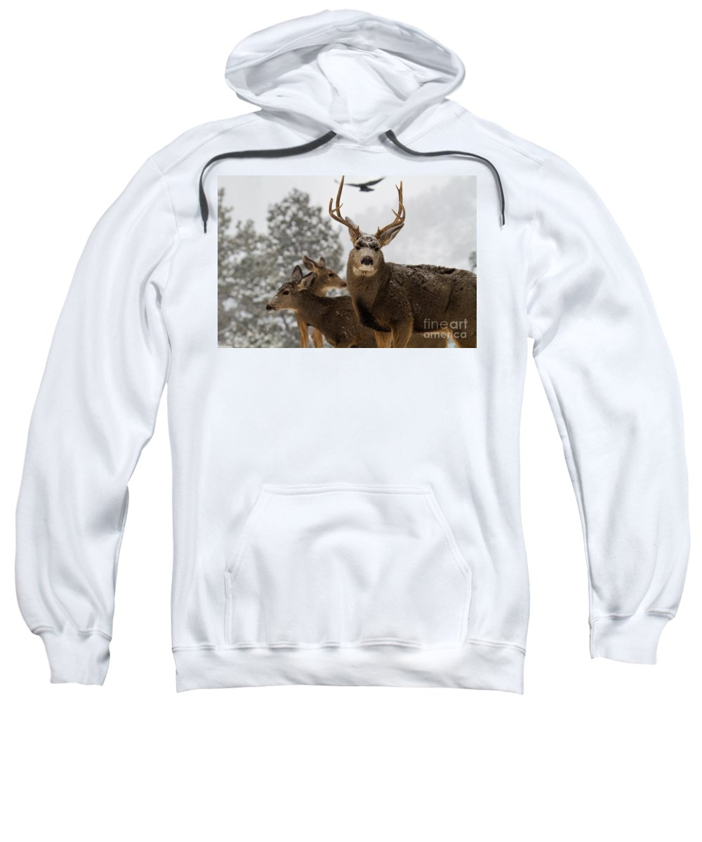 Mule Deer Buck Sweatshirt featuring the photograph The Omen by Jim Garrison