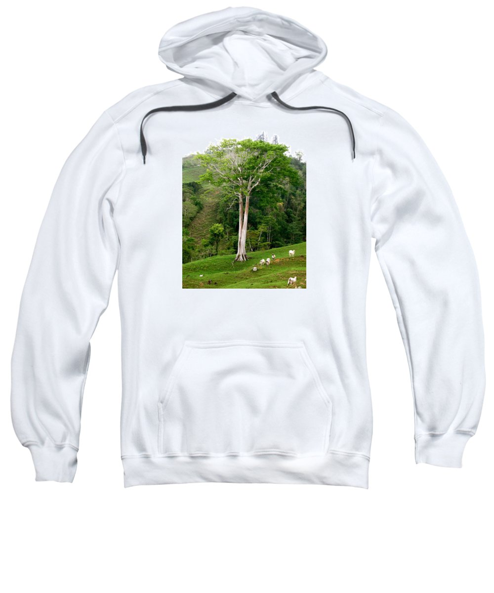 Tree Sweatshirt featuring the photograph The Sable by Hilari Alsip