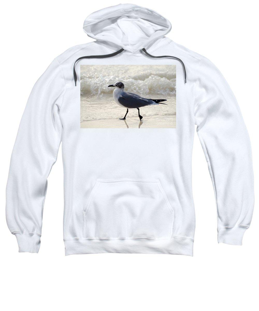 Aruba Sweatshirt featuring the photograph The Strut by Judy Wolinsky