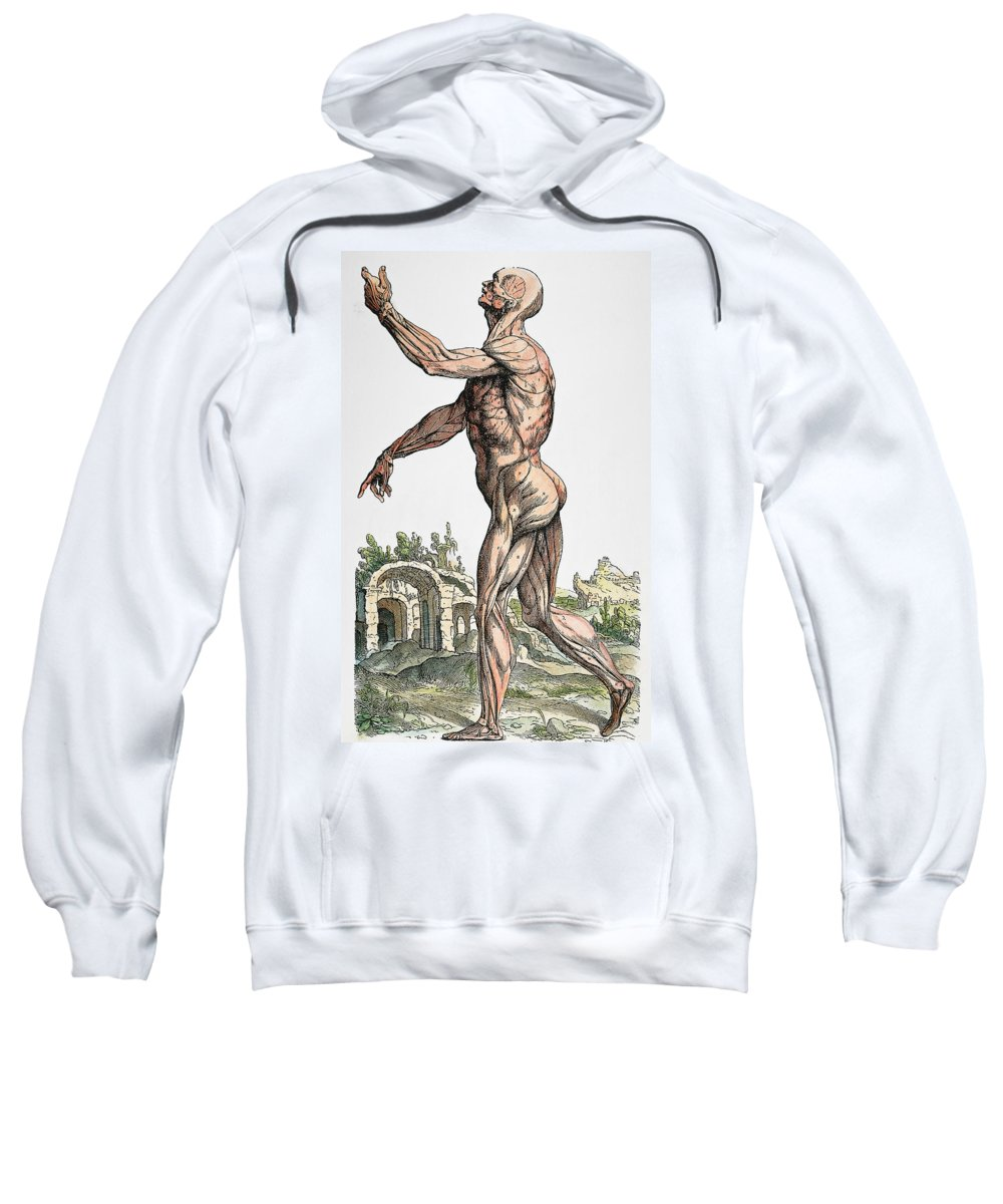 1543 Sweatshirt featuring the photograph Vesalius: Muscles 02, 1543 by Granger