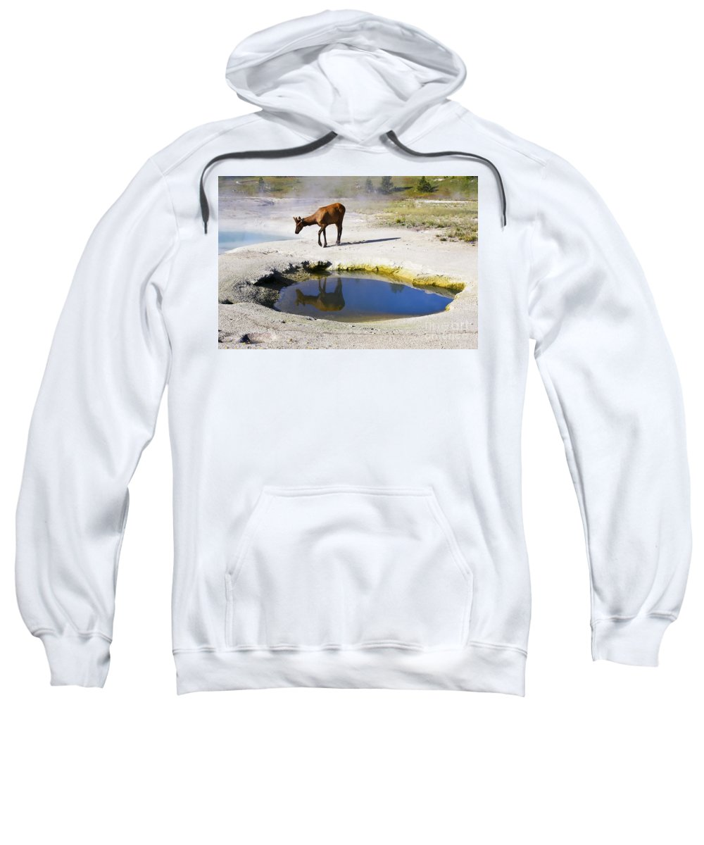 Wildlife Sweatshirt featuring the photograph Visitor At West Thumb Basin by Teresa Zieba